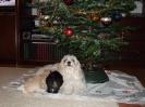 Weihnachten 2011_23