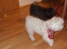 Daisy mit Campino
